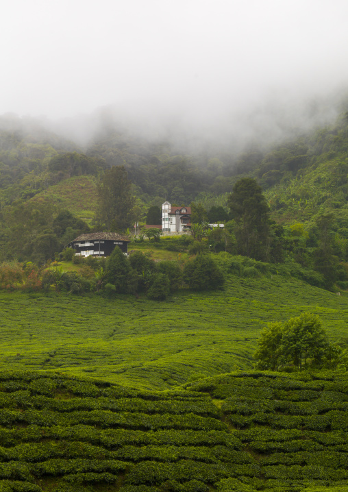 House In The Fog In A Tea Plantation, Cameron Highlands, Malaysia