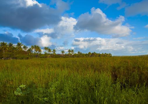 Landscape In The Country, Inhambane, Inhambane Province, Mozambique