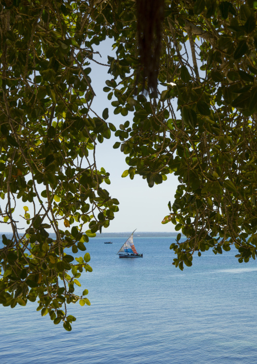 Dhow Sailing, Ilha de Mocambique, Nampula Province, Mozambique