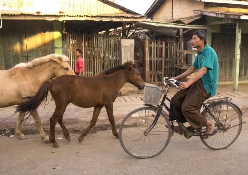 Man Riding A Bicycle Passing In Front Of Horses In The Street, Mrauk U, Myanmar