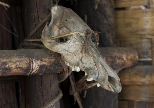 Animal Skull In Front Of A House, Mindat, Myanmar