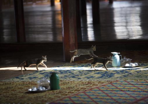 Sasanayaunggyi Monastery With Jumping Cats, Inle Lake, Myanmar