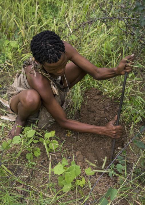 Bushman Woman Digging To Search For Tuber, Tsumkwe, Namibia