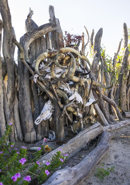 Cow Horns, Ondangwa, Namibia