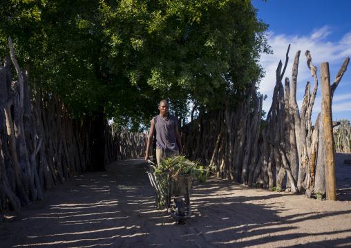 Ovambo Man Collecting Grass, Ondangwa, Namibia