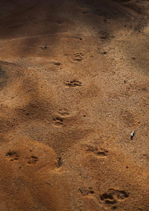 Leopard Footprint, Okonjima, Namibia