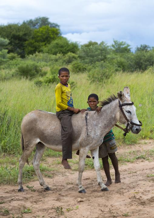 Bushman Children With A Donkey, Tsumkwe, Namibia