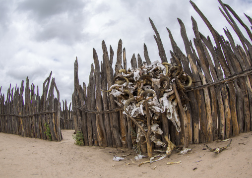 Cow Skulls Inside Of The Palace Of The Queen Of The Okwanyama, Omhedi, Namibia