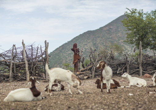 Himba Woman With Goats Epupa, Namibia