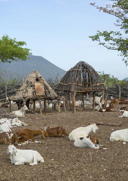 Goats In A Traditional Himba Village, Epupa, Namibia