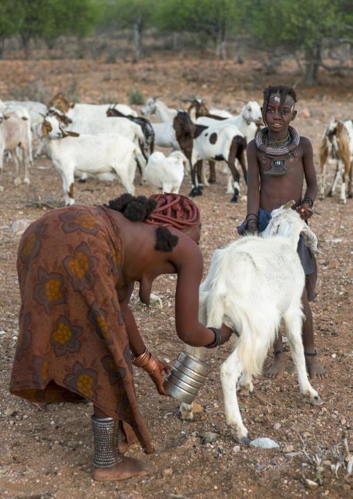 Himba Woman Milking Goats, Epupa, Namibia