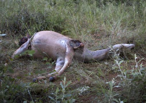 Dead Koudou, Okonjima, Namibia