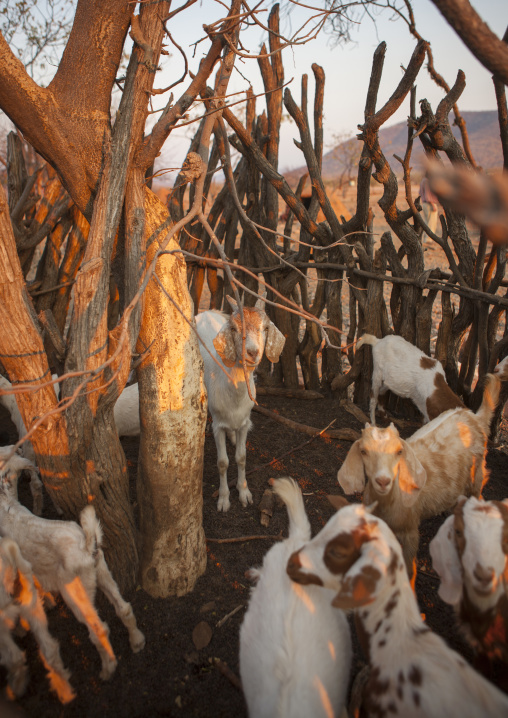 Shelter For Goats In A Traditional Himba Village, Epupa, Namibia