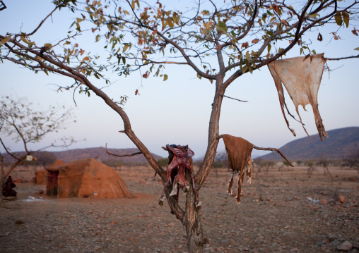 Skinned Game And Its Skin Drying On Tree Branches, Okapale Area, Namibia