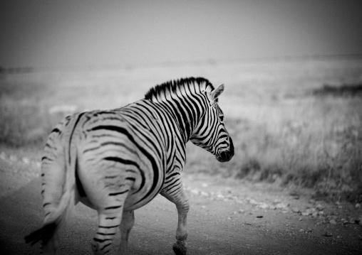 Zebra In Etosha National Park, Namibia