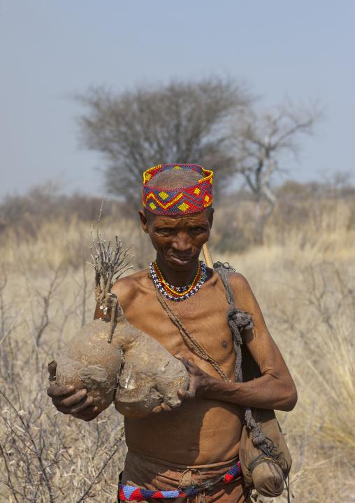 Bushman Carrying A Tuber, Tsumkwe, Namibia