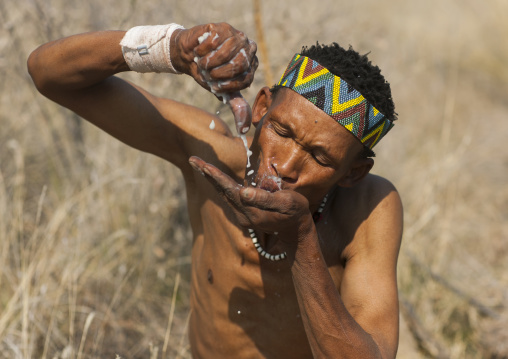 Bushman Squeezing A Tuber And Drinking The Liquid In The Bush, Tsumkwe, Namibia