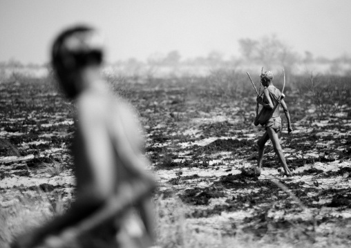 San Hunters Walking In The Bush After A Fire, Namibia