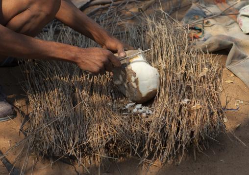 Bushman Cutting A Tuber To Drink The Liquid, Tsumkwe, Namibia