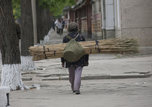 Backside of a North Korean woman carrying wood in the street, North Hwanghae Province, Kaesong, North Korea