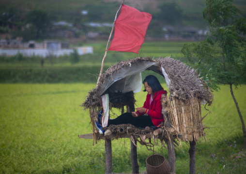 North Korean girl in a little shelter to monitor the fields in the countryside, North Hwanghae Province, Kaesong, North Korea