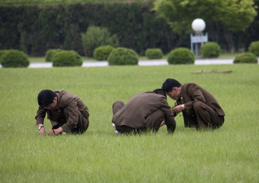 North Korean gardeners working on a lawn, Pyongan Province, Pyongyang, North Korea