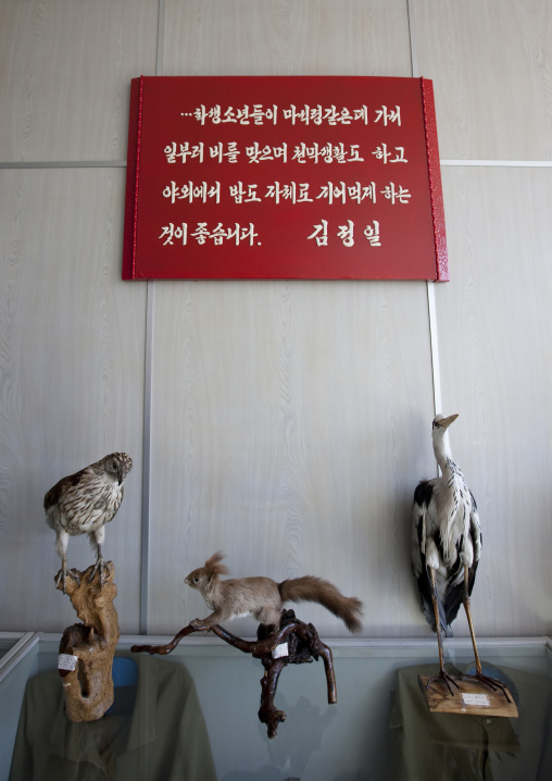 Stuffed birds in Songdowon international children's camp below a Kim Jong-il saying that it is good for children to experiment camping life, Kangwon Province, Wonsan, North Korea