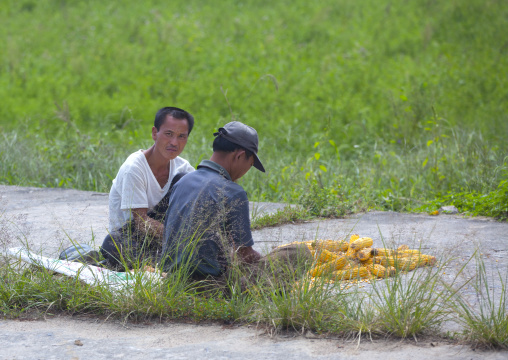 North Korean men collecting corn in a field, North Hwanghae Province, Kaesong, North Korea