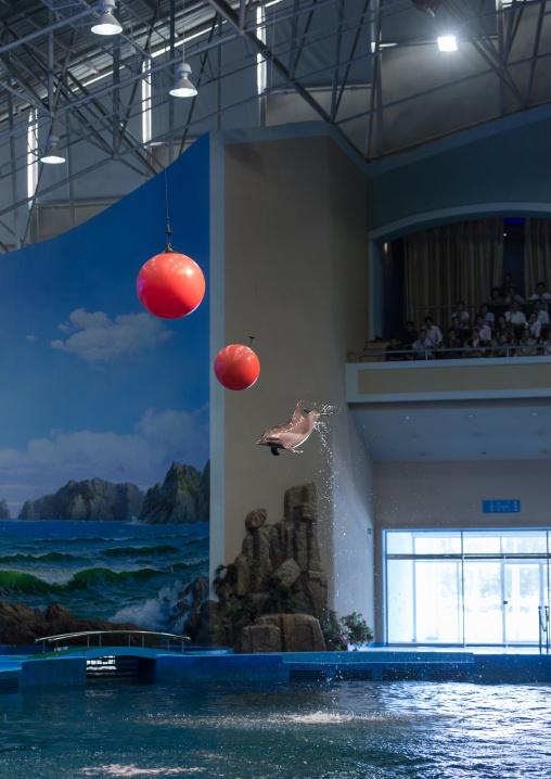 Dolphin show in Rungna dolphinarium, Pyongan Province, Pyongyang, North Korea