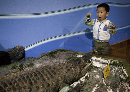 North Korean child boy watching a stuffed crocodile at Rungna dolphinarium, Pyongan Province, Pyongyang, North Korea