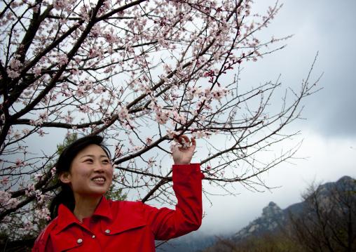 North Korean woman with cherry blossoms, Ogwansan, Ryongthong Valley, North Korea
