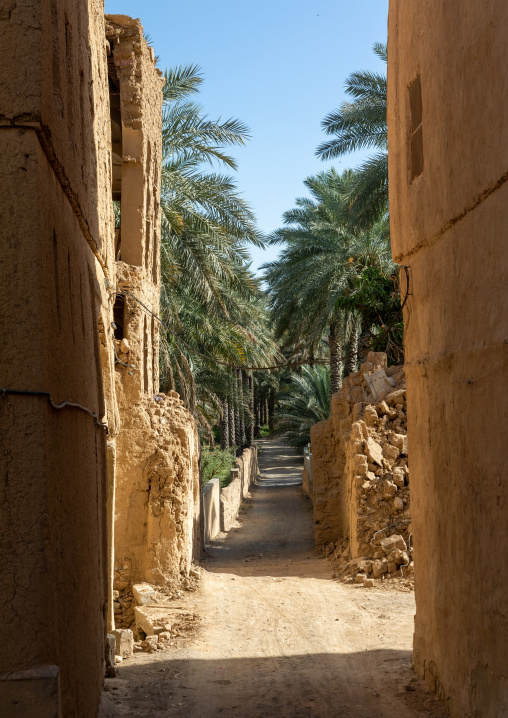Stone and mudbrick houses in an abandoned village in an oasis, Ad Dakhiliyah Region, Al Hamra, Oman