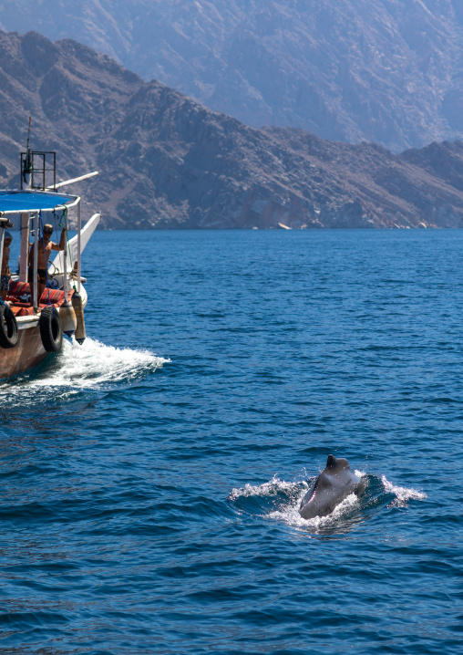 Bottlenose dolphin near a dhow, Musandam Governorate, Khasab, Oman