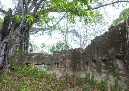 Panama, Darien Province, Boca Grande, Fuerte San Lorenzo Ruins