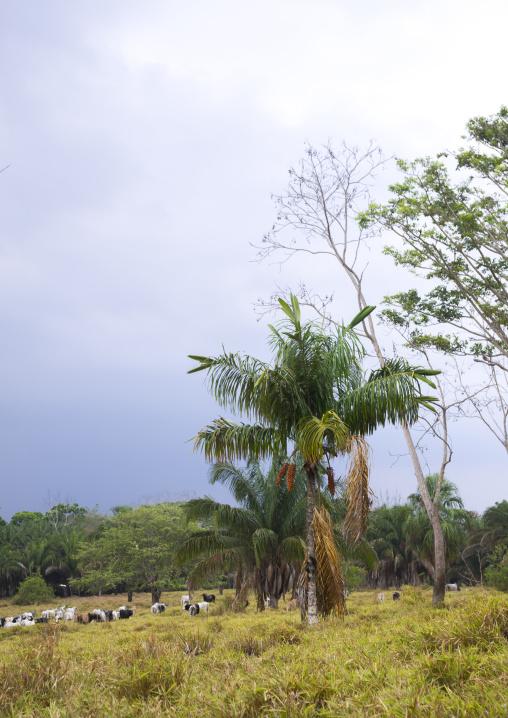 Panama, Darien Province, Filo Del Tallo, Darien National Park