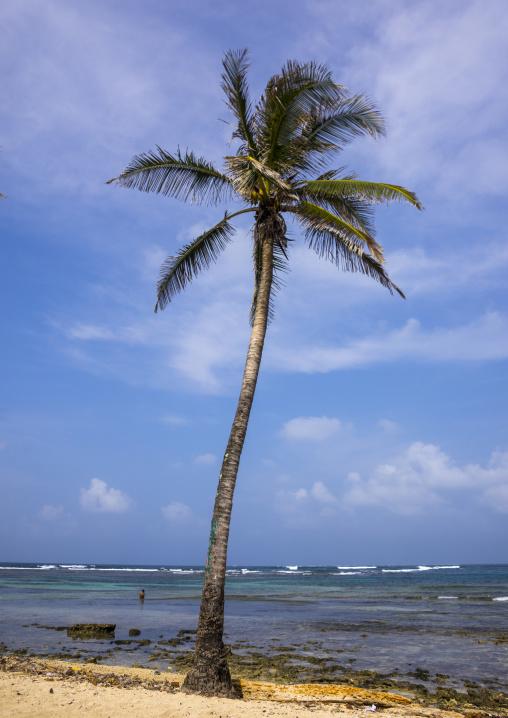 Panama, San Blas Islands, Mamitupu, White Sand Beach And Beautiful Palm Tree
