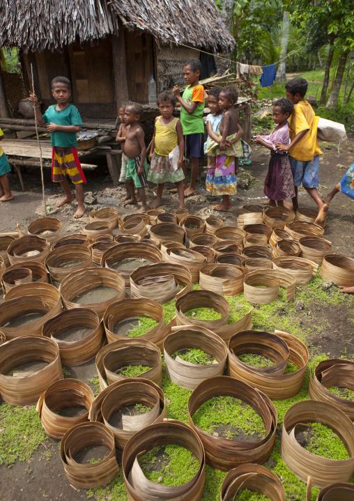 Dried pandanus leaves used to make baskets, Milne Bay Province, Trobriand Island, Papua New Guinea