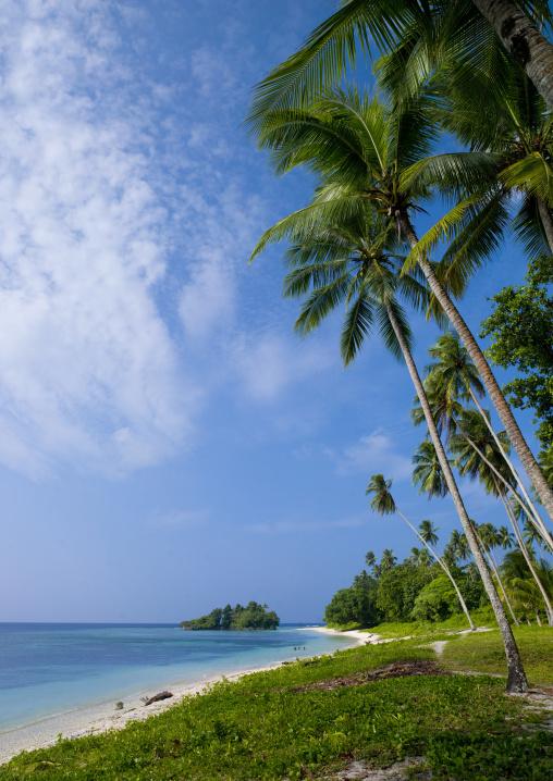 Palm trees on the beautiful deserted kaibola beach, Milne Bay Province, Trobriand Island, Papua New Guinea