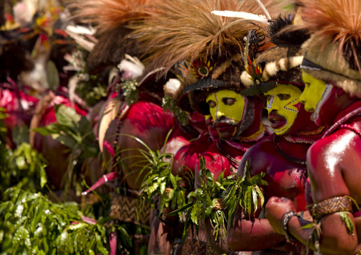Hulis wigmen in traditional clothing during a sing-sing, Western Highlands Province, Mount Hagen, Papua New Guinea