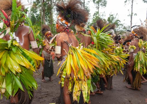 Chimbu tribe women during a Sing-sing, Western Highlands Province, Mount Hagen, Papua New Guinea