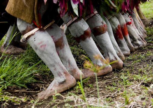 Hulis wigmen feet dancing during a sing-sing, Western Highlands Province, Mount Hagen, Papua New Guinea