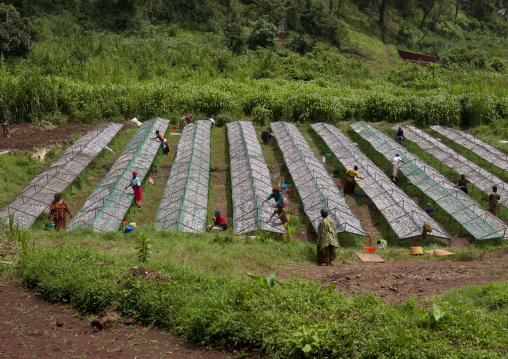 Rwandan women working in a dried fishes farm, Western Province, Rusizi, Rwanda