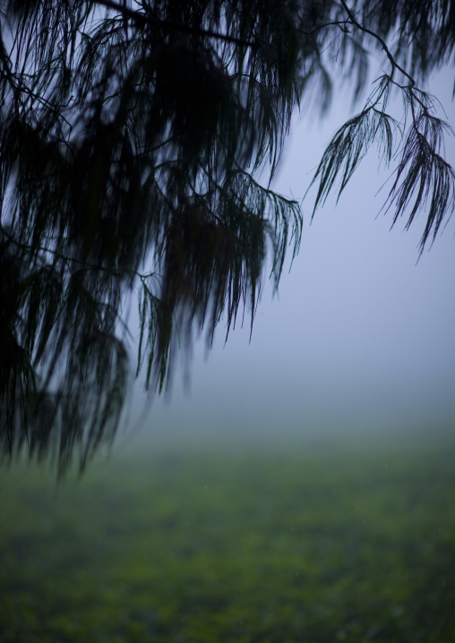 Tea plantations in gisakura village - rwanda, Nyungwe Forest National Park, Gisakura, Rwanda