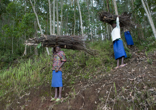 Rwanda women carrying wood on her head, Western Province, Cyamudongo, Rwanda