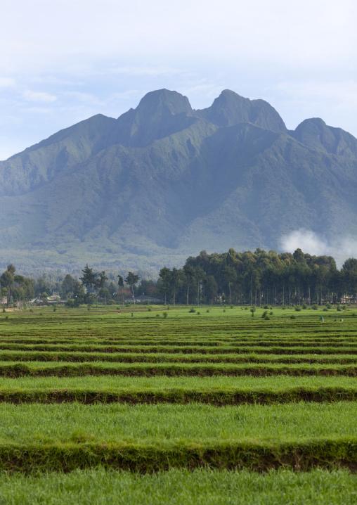Hills over farms in the countryside, Northwest Province, Rehengeri, Rwanda