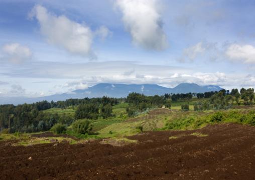 Volcanoes national park, Northwest Province, Rehengeri, Rwanda