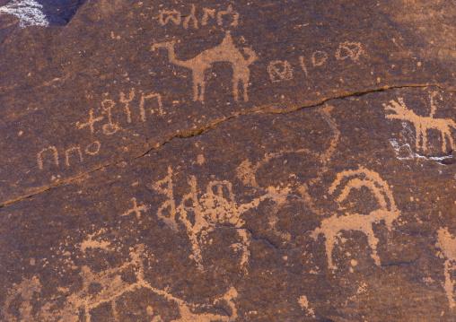 Petroglyphs rock art depicting camels and ibex, Najran Province, Najd Khayran, Saudi Arabia