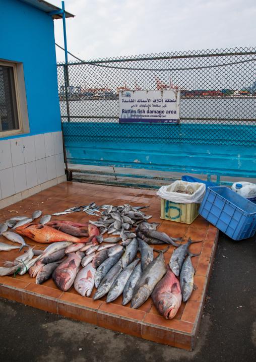 Rotten fish area in the fish market, Mecca province, Jeddah, Saudi Arabia