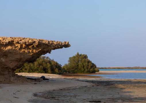 Coral rock on an empty beach, Red Sea, Farasan, Saudi Arabia