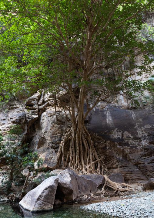 Wadi Lajab, Jizan Province, Jebel Qahar, Saudi Arabia